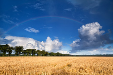 rainbow over wheat field