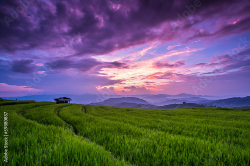 Paddy in the sunset, Chiang Mai province of Thailand