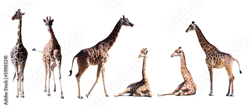 Keuken foto achterwand Giraffe Set of few giraffes