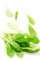 Rucola, isolated