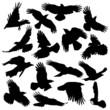 Crow Silhouette set 02