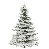 Winter fir-tree on snow isolated at the white background