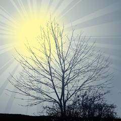 winter sun theme tree