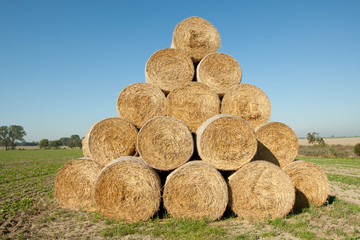 Hay bales in a field