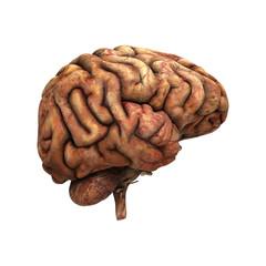 Sick Human Brain