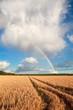 rainbow on blue sky over barley field