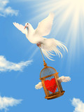 A white dove helping loving heart