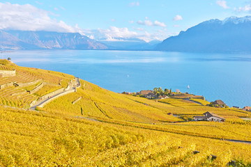 Vineyards in Lavaux region against Geneva lake