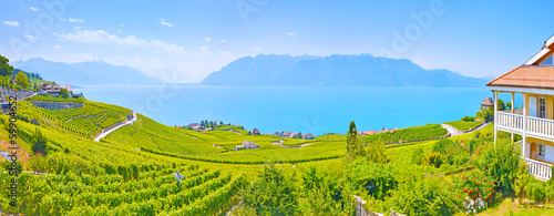 Panorama of vineyards in Lavaux region against Geneva lake