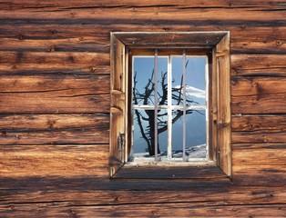 Baum im Holzfenster
