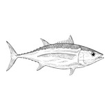 Hand Drawn Illustration of a Albacore Tuna