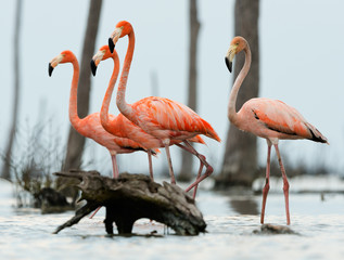 The flamingos walk on water.