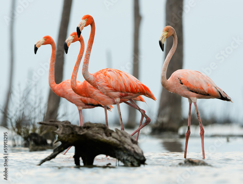 Papiers peints Flamant The flamingos walk on water.