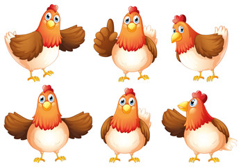 Six fat chickens