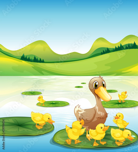 A duck and her ducklings at the pond