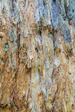 Colored Paper Bark Abstract