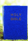 Bible on grass on natural background