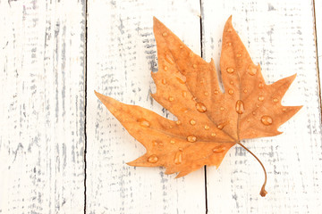 Dry maple leaf with drops, on wooden background