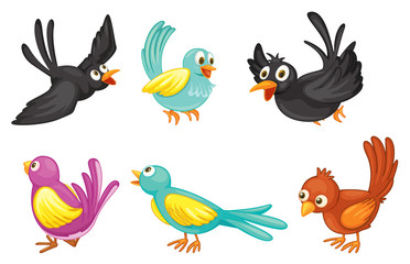 Six colorful birds