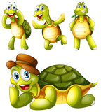 Four playful turtles