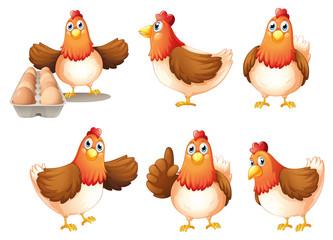 Six fat hens