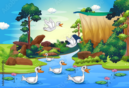 A group of ducks at the river in the forest