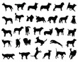 ������, ������: Black silhouettes of dog breeds vector