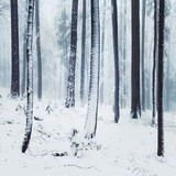 Winter foggy forest scene