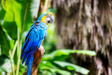 colorful macaw sitting in a tree