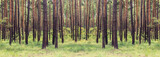 Fototapety forest