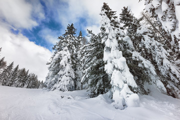 winter landscape in mountain with snow