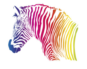 Nice head of zebra isolated on white background