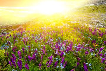 sunset among a green fields
