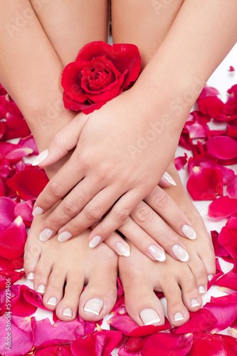 Beautiful woman's hands and legs with red rose petals