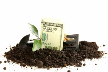 American dollars grow from the ground - the business concept