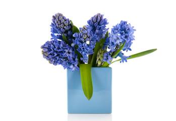 Blue hyacinths in vase