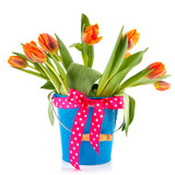 Blue bucket with orange tulips and festive bow