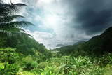 Fototapety jungle of seychelles island