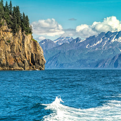 Wildlife Cruise around Resurrection Bay in Alaska