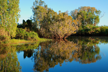 Trees with reflections, Kakadu National Park