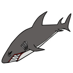 vector drawing of a shark