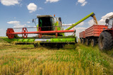 Combine harvester unloads wheat into the tractor