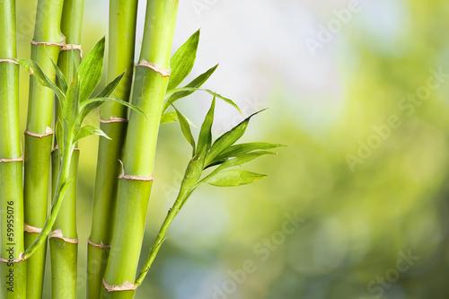 Foto op Canvas Bamboo Fresh Bamboo