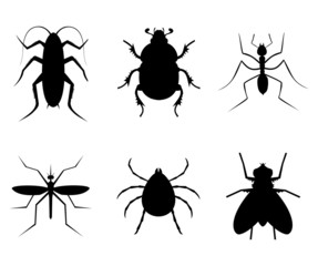 Collection insect
