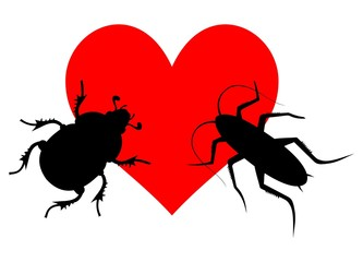 Love insect
