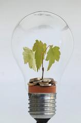 Pflanze in einer Glühlampe