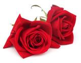 Closeup of red roses
