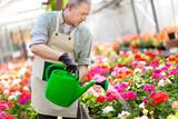 Portrait of a greenhouse worker watering plants
