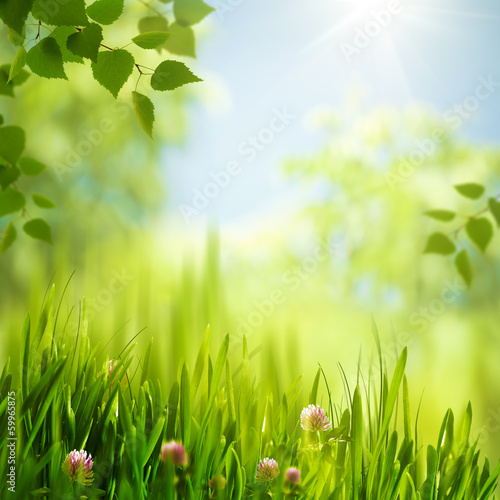 Beauty summer day in the forest, abstract seasonal backgrounds