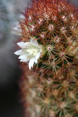 pianta grassa con fiore bianco